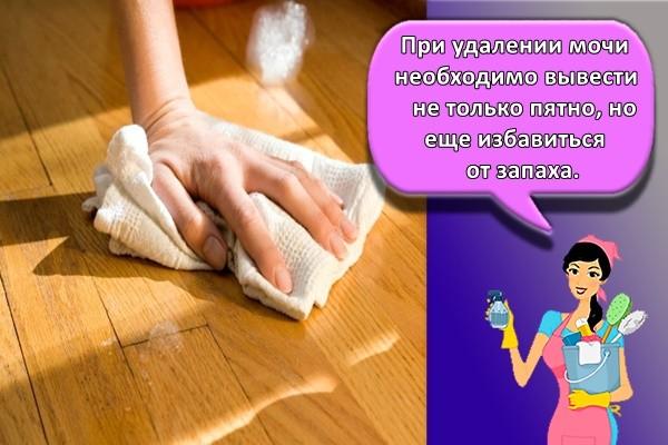 При удалении мочи необходимо вывести не только пятно, но еще избавиться от запаха.