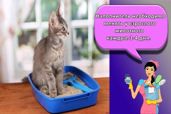Наполнитель необходимо менять у взрослого животного каждые 3-4 дня.
