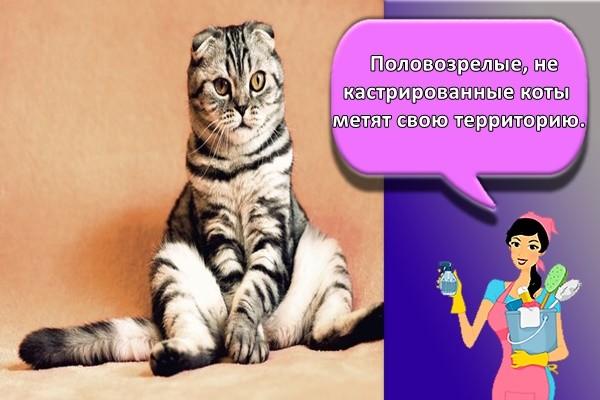 Половозрелые, не кастрированные коты метят свою территорию.