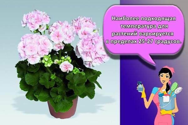 Наиболее подходящая температура для растений варьируется в пределах 25-27 градусов.