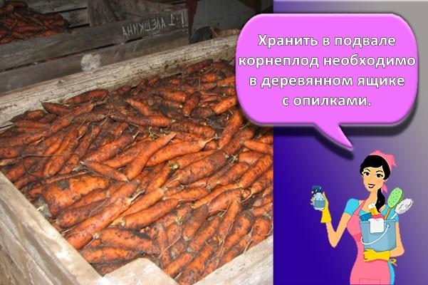 морковь в подвале