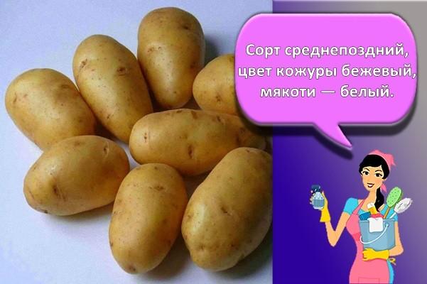 сорт картошки