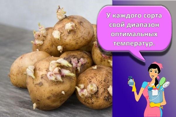 глазки картошки