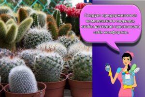Как в домашних условиях правильно ухаживать за кактусом, пересадка и полив