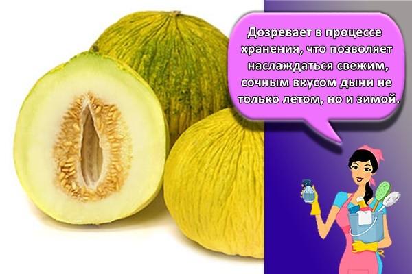 Дозревает в процессе хранения, что позволяет наслаждаться свежим, сочным вкусом дыни не только летом, но и зимой. Не