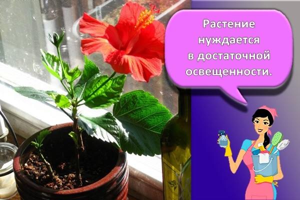 освещение цветка