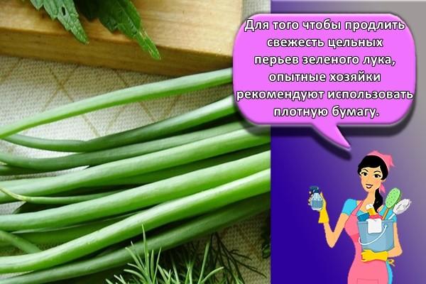 Для того чтобы продлить свежесть цельных перьев зеленого лука, опытные хозяйки рекомендуют использовать плотную бумагу