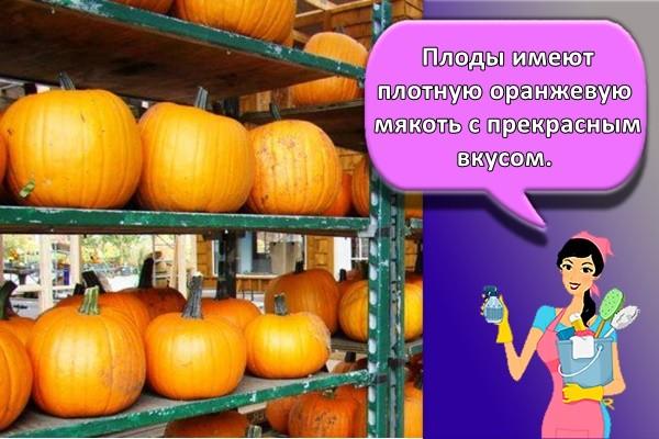 Плоды имеют плотную оранжевую мякоть с прекрасным вкусом.