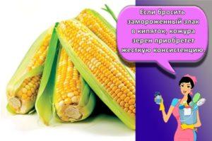 Как можно сохранить на зиму кукурузу в початках, правила и выбор места