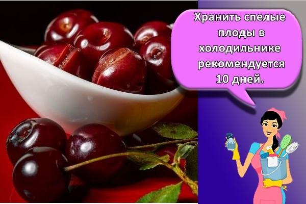 Хранить спелые плоды в холодильнике рекомендуется 10 дней.