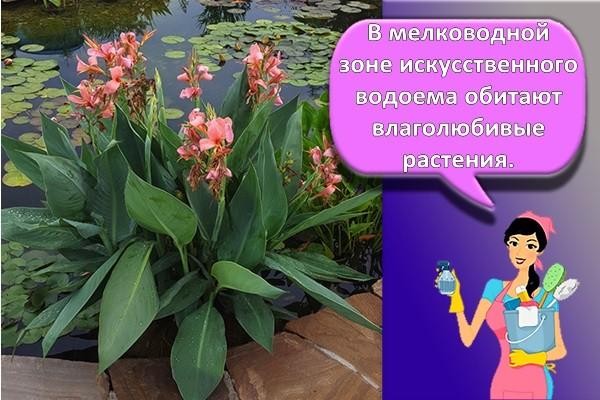мелководные растения