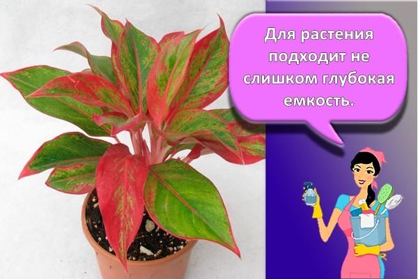 горшки для растения