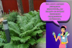 Правила посадки и ухода за папоротником в саду, агротехника и секреты выращивания