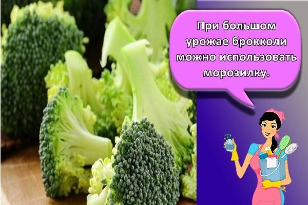 При большом урожае брокколи можно использовать морозилку.