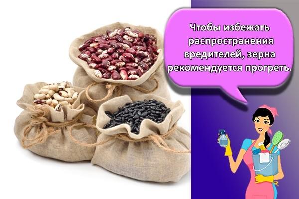 Чтобы избежать распространения вредителей, зерна рекомендуется прогреть.