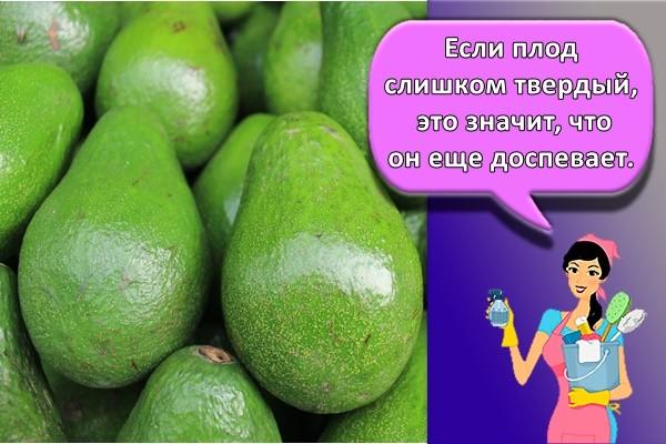Если плод слишком твердый, это значит, что он еще доспевает.