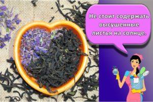 Как в домашних условиях хранить иван-чай, правила и способы сушки