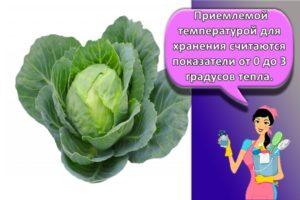 Правила и лучшие способы, как хранить в домашних условиях капусту
