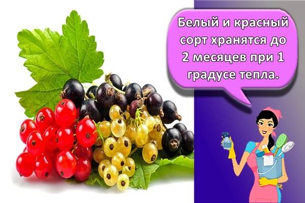 Белый и красный сорт хранятся до 2 месяцев при 1 градусе тепла.