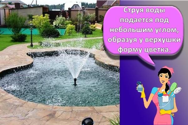 фонтан тюльпан