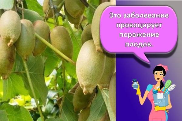 гниль на плодах