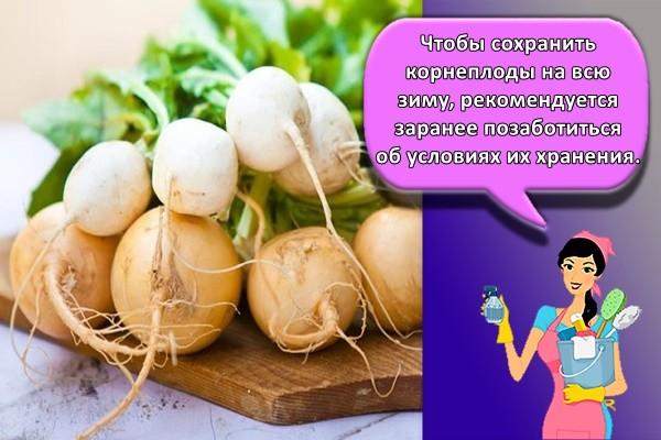 Чтобы сохранить корнеплоды на всю зиму, рекомендуется заранее позаботиться об условиях их хранения.