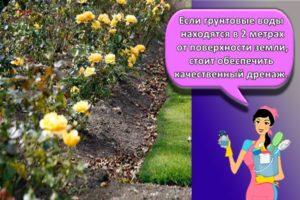 Оформление дизайна клумбы из роз, что посадить рядом и правила сочетания цветов