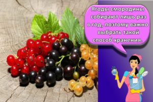 Лучшие способы, как сохранить смородину протертую с сахаром в домашних условиях