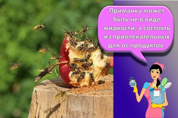 осы на яблоке