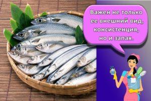 Сколько и как правильно можно в морозилке хранить рыбу, сроки и выбор температуры