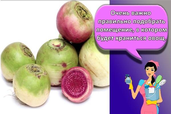 Очень важно правильно подобрать помещение, в котором будет храниться овощ.