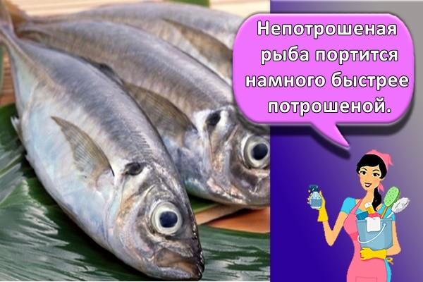 Непотрошеная рыба портится намного быстрее потрошеной.