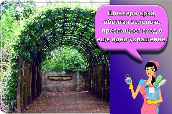 Шпалера-арка, обвитая зеленью, превращает вход в еще одно украшение.