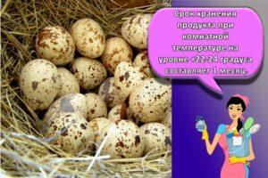 Сколько и как правильно можно хранить сырые перепелиные яйца в холодильнике, срок годности