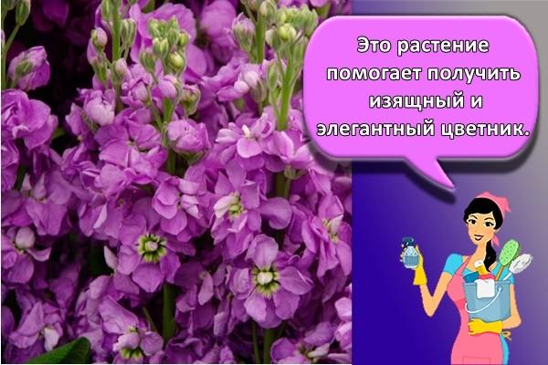 Это растение помогает получить изящный и элегантный цветник.