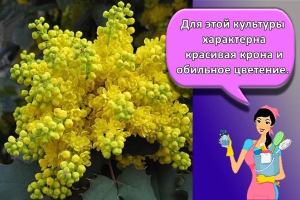 Для этой культуры характерна красивая крона и обильное цветение.