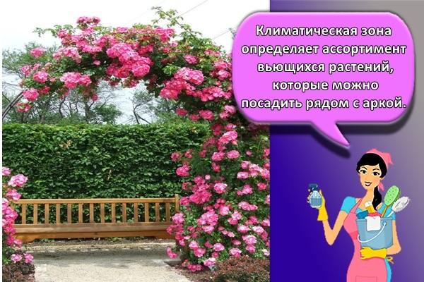 Климатическая зона определяет ассортимент вьющихся растений, которые можно посадить рядом с аркой.