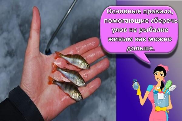 Основные правила, помогающие сберечь улов на рыбалке живым как можно дольше.