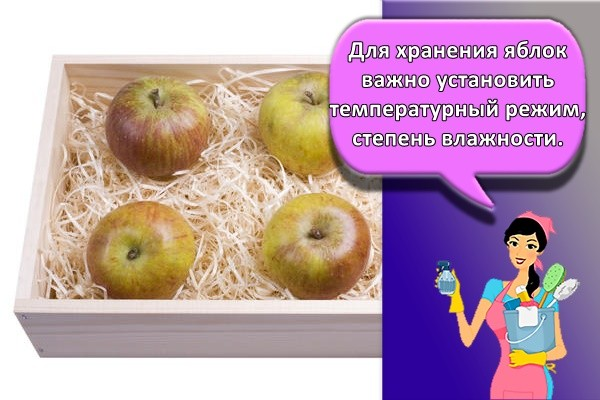 Для хранения яблок важно установить температурный режим, степень влажности.