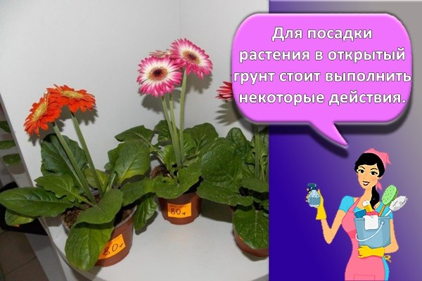 высадка цветов