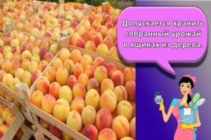 Правила и лучшие способы, как в домашних условиях хранить абрикосы
