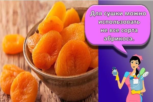 Для сушки можно использовать не все сорта абрикоса.