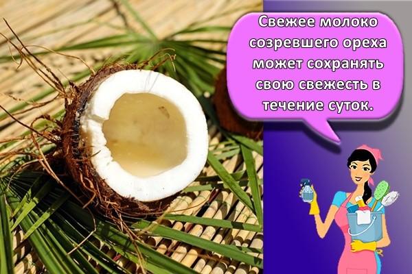 Свежее молоко созревшего ореха может сохранять свою свежесть в течение суток.