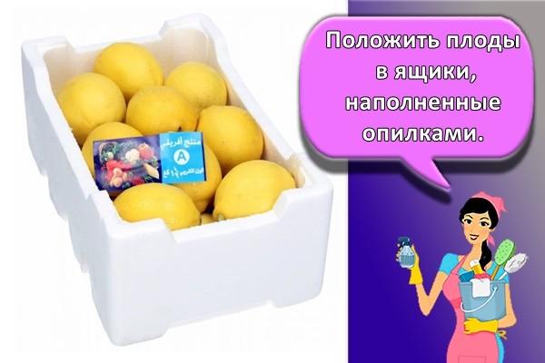 Положить плоды в ящики, наполненные опилками.