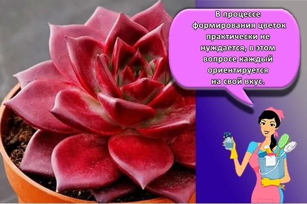 В процессе формирования цветок практически не нуждается, в этом вопросе каждый ориентируется на свой вкус.