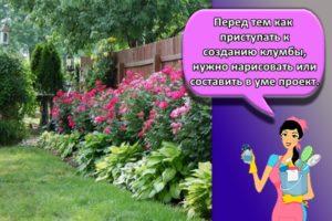 Правила составления клумбы с флоксами, удачные сочетания с другими цветами