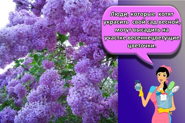 Люди, которые хотят украсить свой сад весной, могут высадить на участке весеннецветущие цветочки.