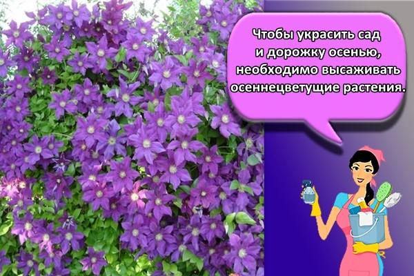 Чтобы украсить сад и дорожку осенью, необходимо высаживать осеннецветущие растения.