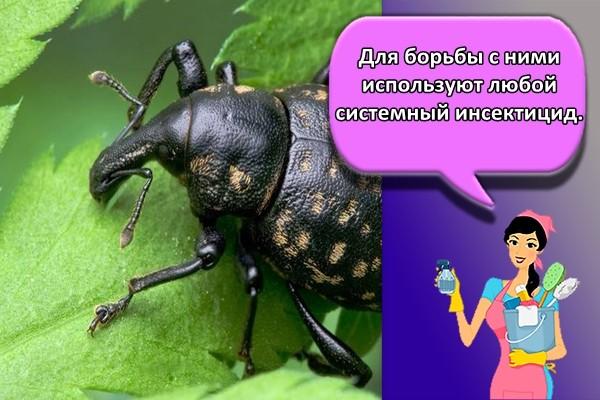 Для борьбы с ними используют любой системный инсектицид.