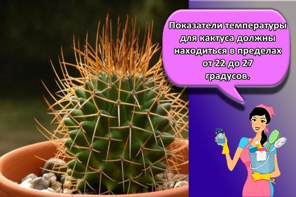 Показатели температуры для кактуса должны находиться в пределах от 22 до 27 градусов.